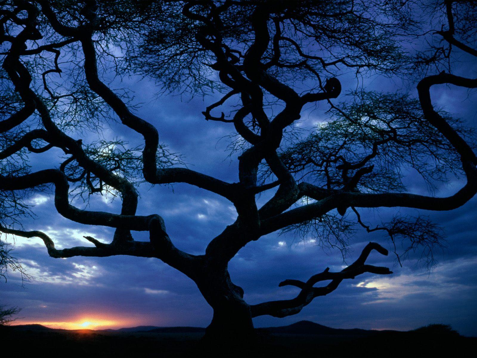 Serengeti National Park | Vijana FM
